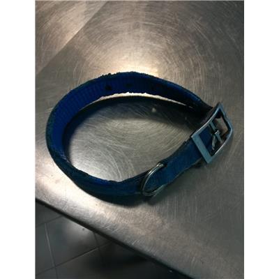ASL Veterinaria RM D - 380260044476908