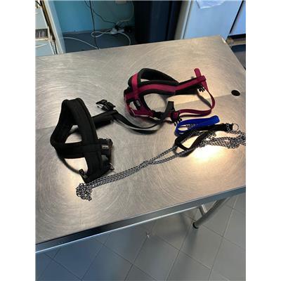 ASL Veterinaria RM D - 380260044437079