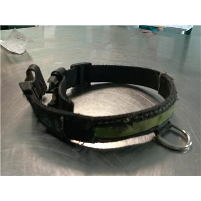 ASL Veterinaria RM D - 380260044476551