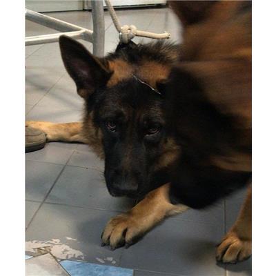 ASL Veterinaria RM D - 380260140055708