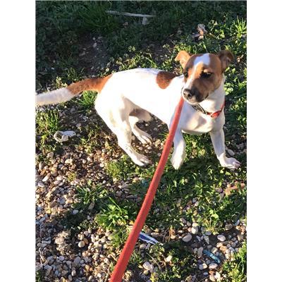 ASL Veterinaria RM D<br />cane - Jack Russel Terrier<br />380260101274874